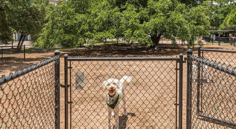 Leash-free bark park at our pet-friendly apartments near Lake Travis, TX