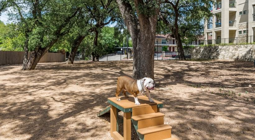 Leash-Free Bark Park with Water Stations