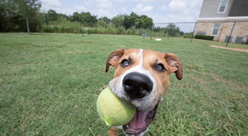 Pet friendly apartments with leash free dog park