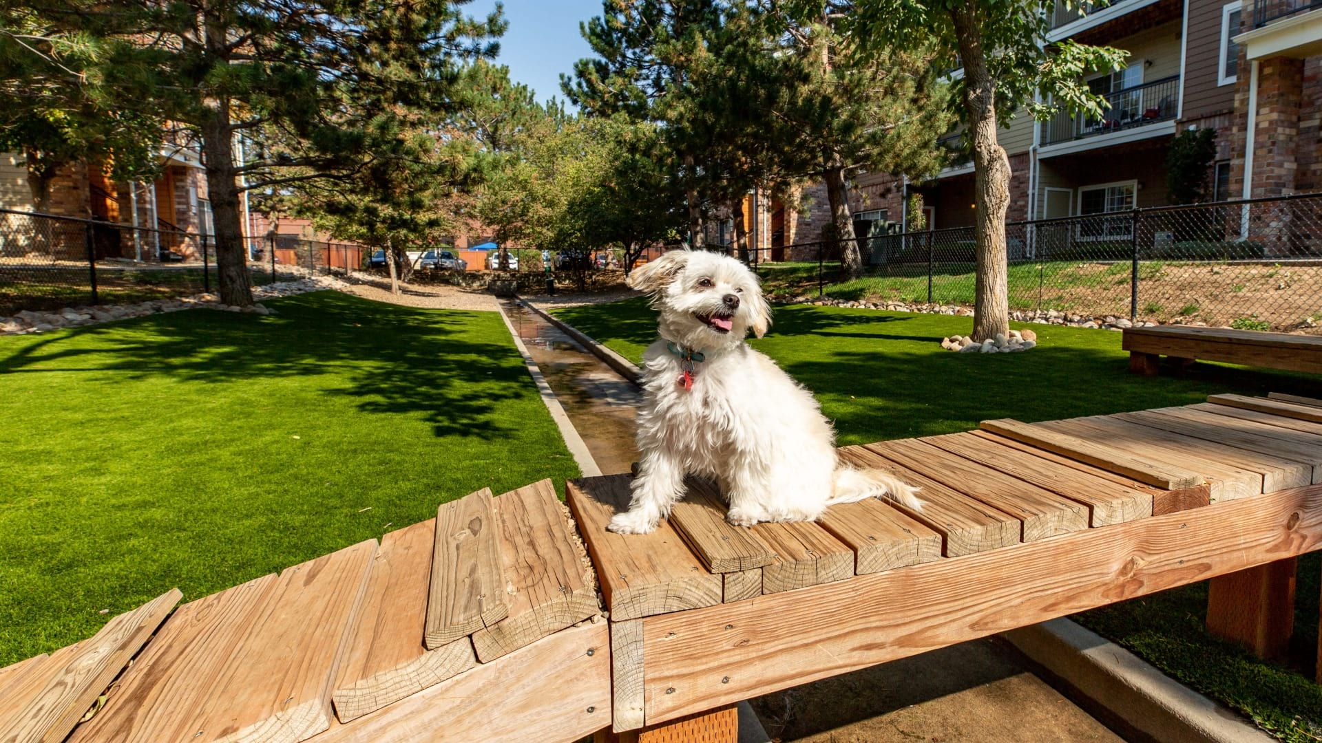 A dog enjoying the dog park at our pet-friendly apartments near Cherry Creek
