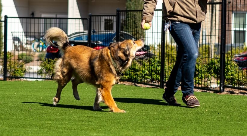 Dog park at our pet friendly apartments in Norcross, GA