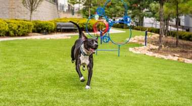 Pet friendly apartments with dog park in Atlanta, GA
