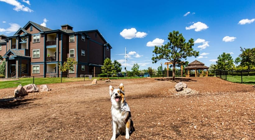 Dog playing at our pet-friendly apartments in Colorado Springs